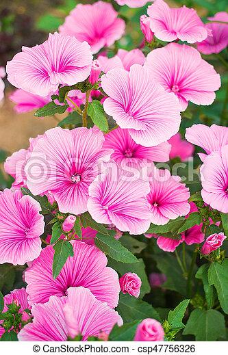 Beautiful Garden Flowers Common Names For Species In This Genus