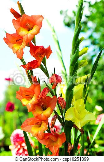 Beautiful Garden Flowers - csp10251399
