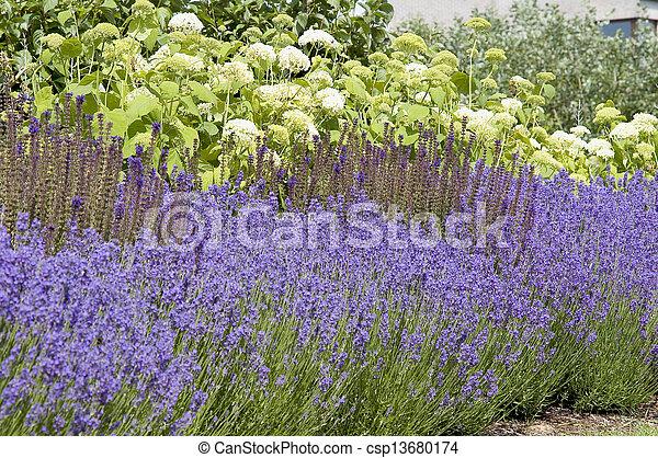 Beautiful garden in spring. - csp13680174