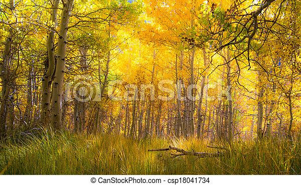 Beautiful golden aspen grove - csp18041734