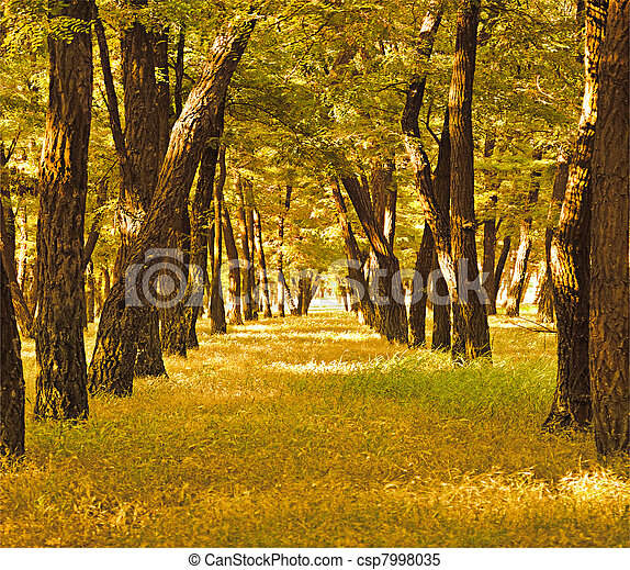 beautiful golden autumn forest - csp7998035