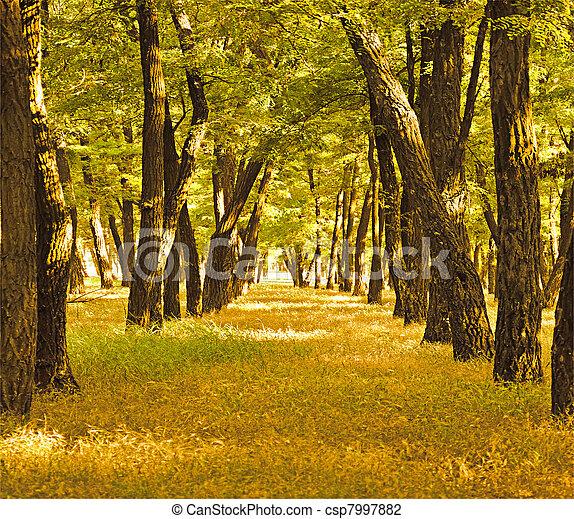 beautiful golden autumn forest - csp7997882