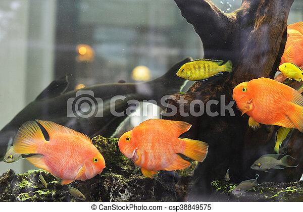 Beautiful Goldfish In Freshwater Aquarium