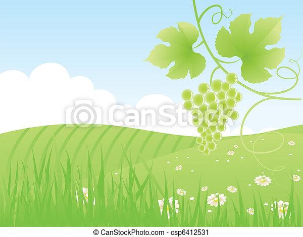 Beautiful green field with grape. - csp6412531