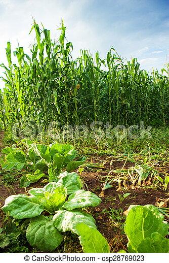 beautiful green meadow - csp28769023