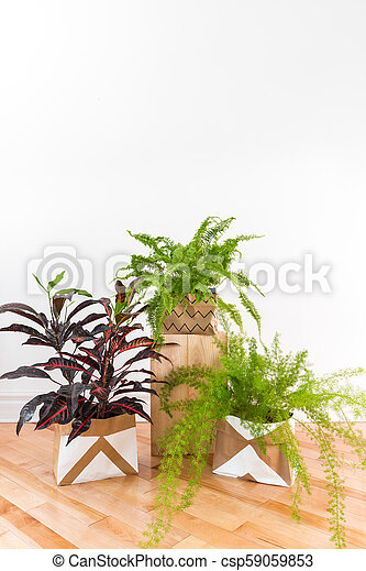 Beautiful green plants in a room with white wall - csp59059853