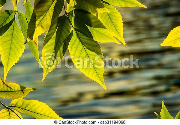 Beautiful green yellow leaves in autumn - csp31194068