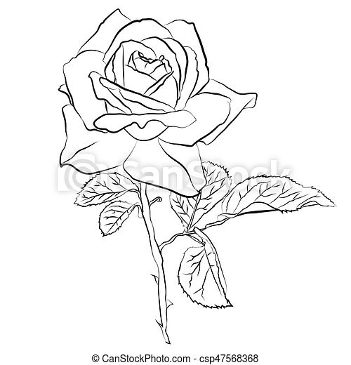 Beautiful Hand Drawn Sketch Rose Isolated Black Contur On White
