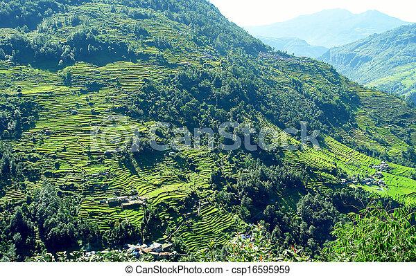 Beautiful Himalayan Forest Landscape Trek To Annapurna Base