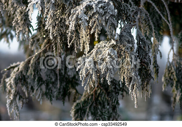 Beautiful hoarfrost on a tree - csp33492549