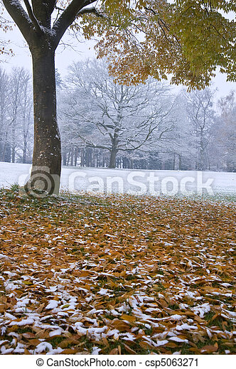 Beautiful image of Autumn Fall color tree and leaves on ground with snow covered ground and trees in background giving impression of seasonal change in one image - csp5063271