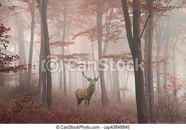 Beautiful image of red deer stag in foggy Autumn colorful forest landscape image - csp43848845