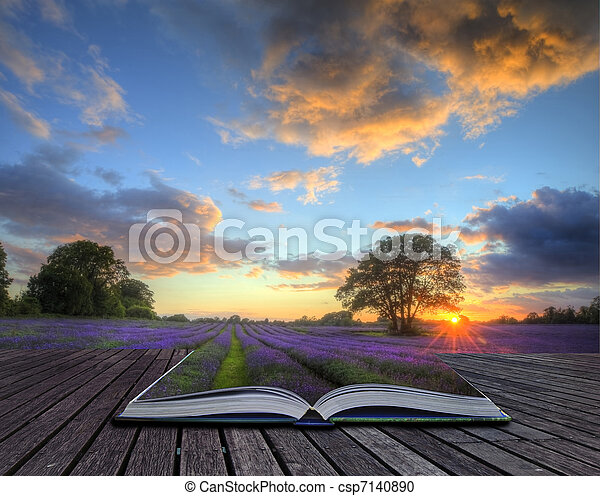 Beautiful image of stunning sunset with atmospheric clouds and sky over vibrant ripe lavender fields in English countryside landscape coming out of pages in magic book, creative concept image - csp7140890