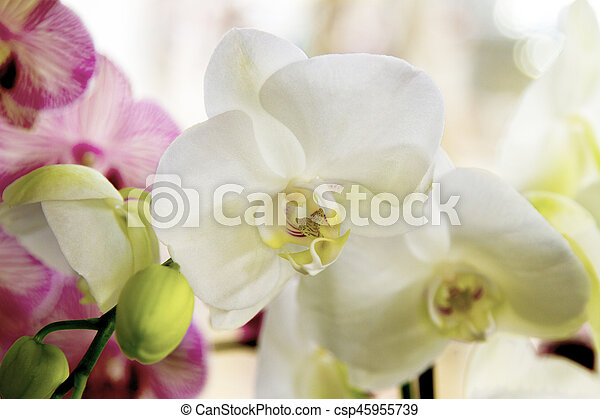 Image Of A Beautiful Indoor Flower White Orchid With Yellow Center