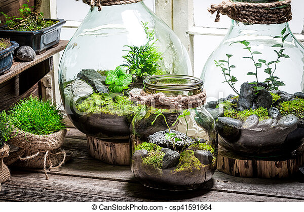 Beautiful jar with live forest with self ecosystem - csp41591664