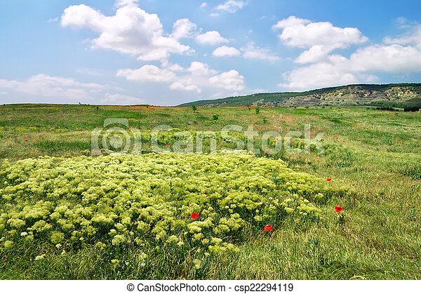 Beautiful landscape. Field in Crimea. - csp22294119