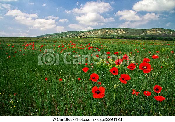 Beautiful Landscape. Field in Crimea. - csp22294123