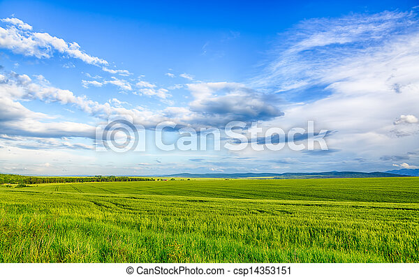 Beautiful landscape field of wheat, cloud and mountain. HDR image - csp14353151