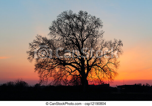 Beautiful landscape image with trees silhouette at sunset. - csp12190804