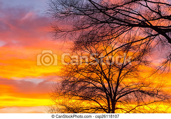 Beautiful landscape image with trees silhouette at sunset in spr - csp26118107