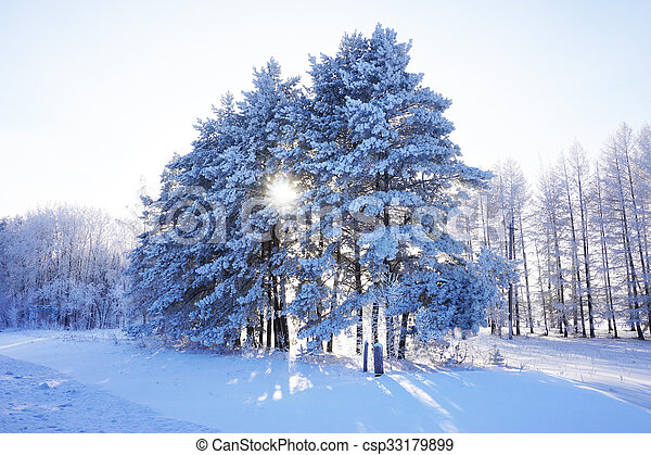 beautiful landscape in winter - csp33179899
