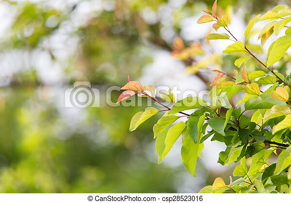 beautiful leaves on the tree in nature - csp28523016