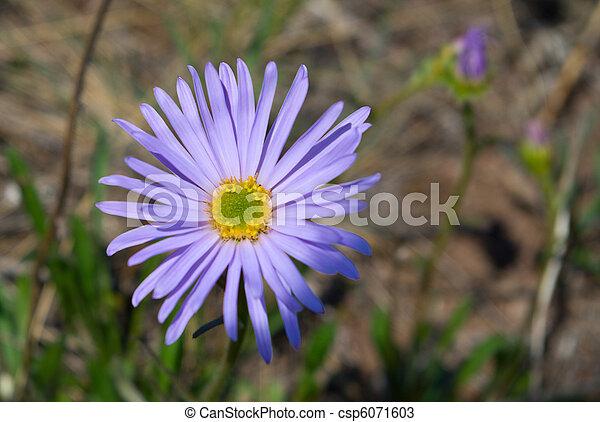 Beautiful lilac flower - csp6071603