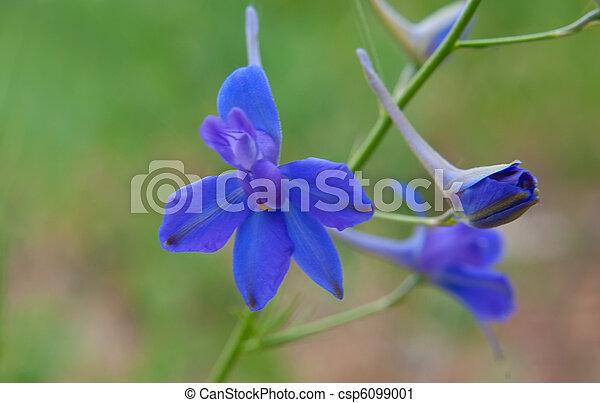Beautiful lilac flowers - csp6099001
