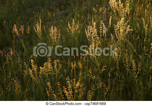 beautiful lilac flowers - csp74691669