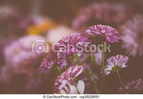 beautiful lilac flowers - csp35228051
