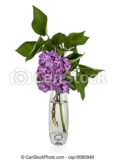 Beautiful lilac flowers - csp18060949