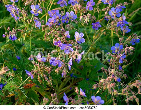 Beautiful lilac flowers - csp6053780