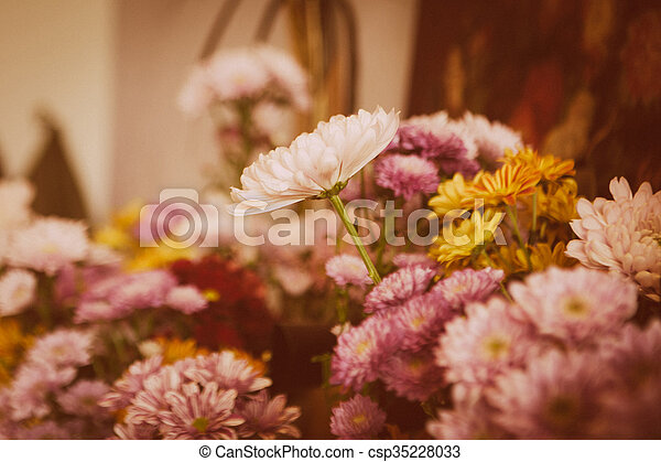 beautiful lilac flowers - csp35228033