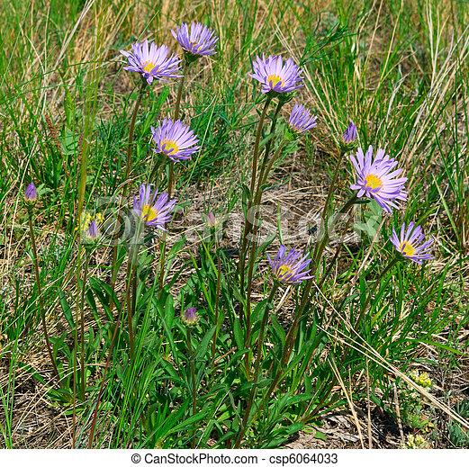 Beautiful lilac flowers - csp6064033