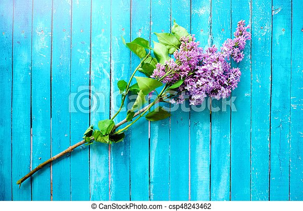 Beautiful lilac on a blue wooden background - csp48243462