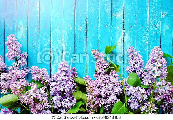 Beautiful lilac on a blue wooden background - csp48243466