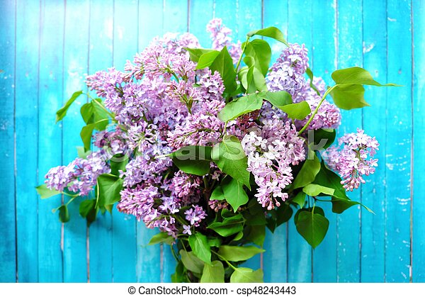 Beautiful lilac on a blue wooden background - csp48243443
