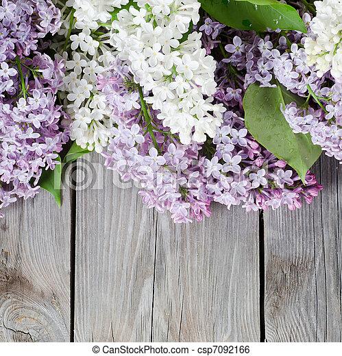 Beautiful lilac - csp7092166