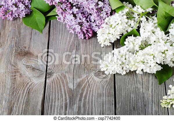 Beautiful lilac - csp7742400