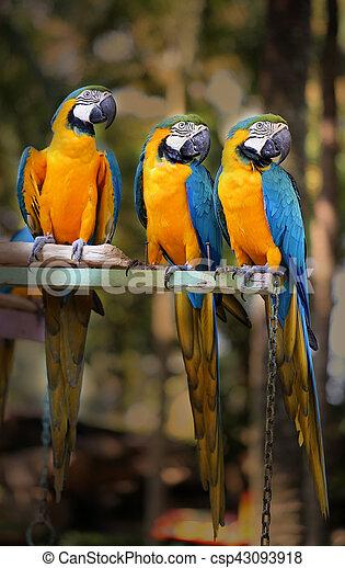 Beautiful macaw parrots - csp43093918