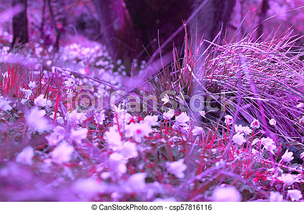 Beautiful, magical Spring flowers in the forest - csp57816116