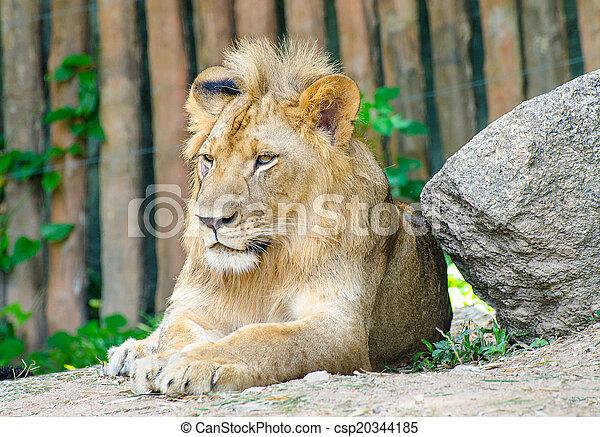 Beautiful male lion - csp20344185
