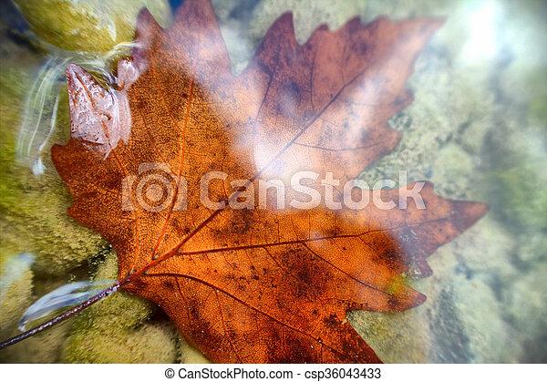 Beautiful maple leaf underwater - csp36043433