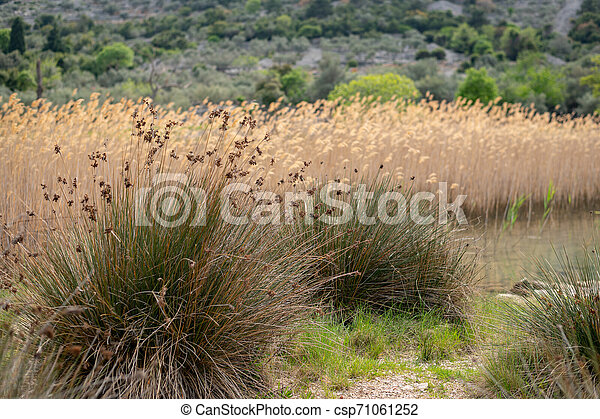 Beautiful Mediterranean Plants Standing Near The Shore In Croatia