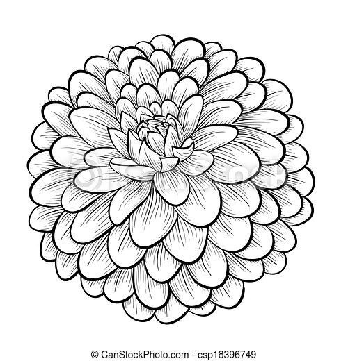 Beautiful monochrome black and white dahlia flower isolated on white background hand drawn - Dahlia dessin ...