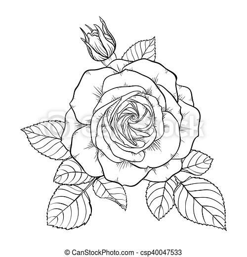 Beautiful monochrome black and white bouquet rose isolated on background. hand-drawn. design ...