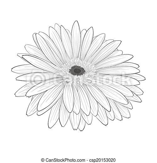 Beautiful monochrome black and white gerbera flower isolated hand beautiful monochrome black and white gerbera flower isolated hand drawn contour lines and strokes mightylinksfo