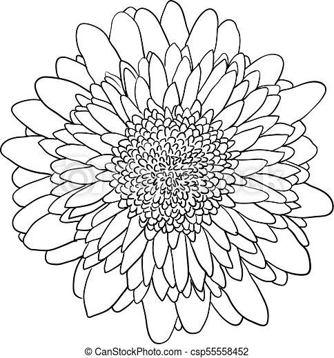 black and white dahlia clipart - Google Search | Flower line drawings, Line  art drawings, Flower drawing