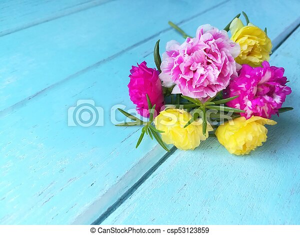 Beautiful moss rose flowers, colorful floral, blue wooden background ...