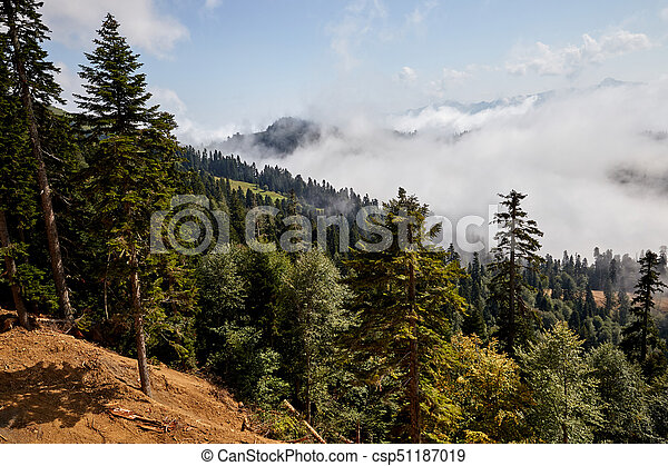 Beautiful Mountain Forest Landscape Beautiful Clouds And Fog Among